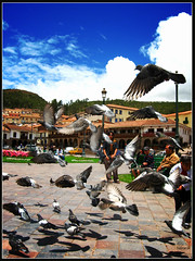 Static on Heaven (el.nalga@gmail.com) Tags: bird birds picchu inca canon flying is photo cusco picture machupichu per greatshot palomas hermoso goodshot interesante beutiful fotografa smrgsbord 720 greatcapture goodcolours perfectshot pidget pjarosmachu nalgaman goodcarpture