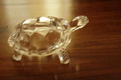 Tortoise at Home (Swami Stream) Tags: india glass bangalore tortoise livingroom banaglore ulsoor bengaluru swamistreamcom