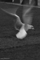 Flynn, Dick, Sarah en Roxy ... en Arwen1-2 (Enric Martinez) Tags: amsterdam birds vogels pájaros vögel noordholland vgel pjaros