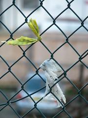 Tied up. (Jobe) Tags: fence brighton plastic tied
