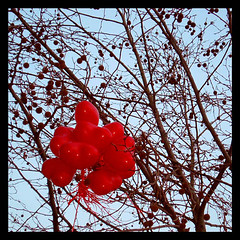 Who says love doesn't grow on trees? (Philip Watson) Tags: tree heart balloon valentine lovehearts tangled taunton entangled branched