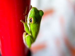 Preventing the Frog Dance (tomhauburn) Tags: dance frog naturesfinest animalkingdomelite gardenvisitors