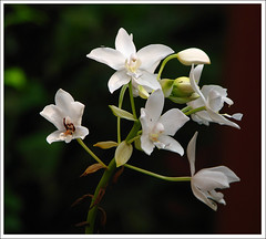 White Flower (Midhun Manmadhan) Tags: flowers white exposure dof canonpowershots3is