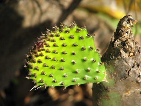 cactus lalbagh 150308 vittal pallavi anush