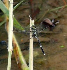 P1040053 dragonfly