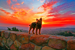 Maggie nificent (artfilmusic) Tags: sunset welshterrier