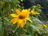 96.11.16竹崎鄉光華村茄苳風景區內的茄苳老樹DSCN3260