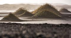 Iceland - Stokksnes/Vestrahorn - marram grass [Explored 18-2-2017] (Henk Verheyen) Tags: ijsland iceland autumn buiten fotoreis herfst landscape landschap nature natuur outdoor outsite stokknes marram grass beach vestrahorn strand zee sea