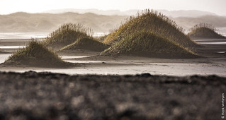 Iceland - Stokksnes/Vestrahorn - marram grass [Explored 18-2-2017]