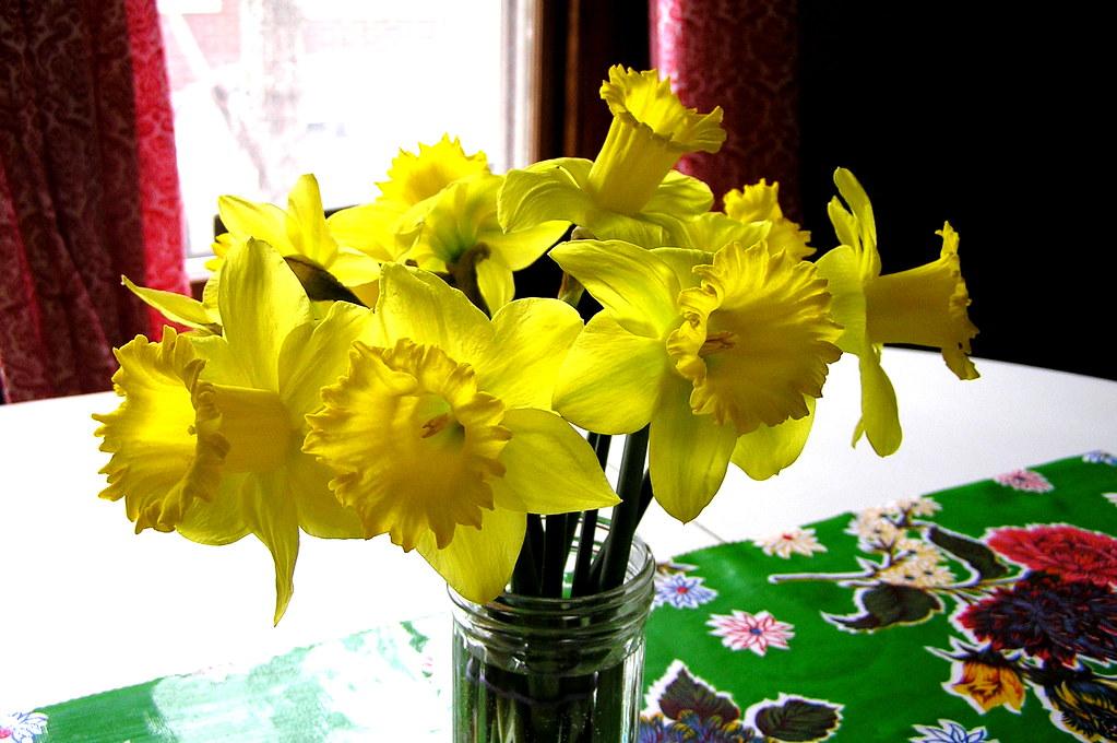 merci daffodils