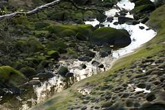 Berry Creek: Low Tide (Conor O'Dea) Tags: water rock creek moss sydney australia berrycreek gorecovetrack