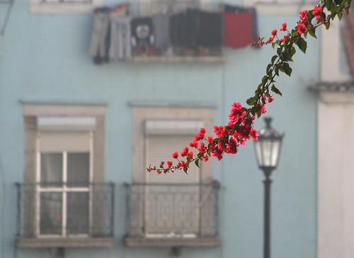 Em Lisboa (by Loca....)