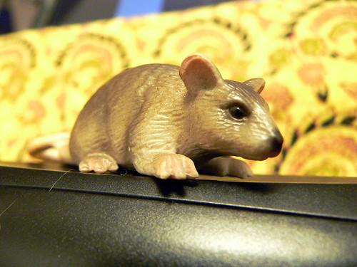 miniature rat
