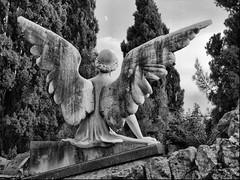 [フリー画像] 芸術・アート, 彫刻・彫像, 月, 天使, モノクロ写真, 201009241300