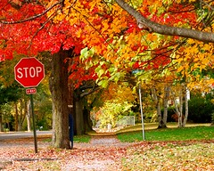 stop (Ben McLeod) Tags: road autumn fall leaves sign mailbox newhampshire fallfoliage stopsign intersection concord 105mmf28gvrmicro