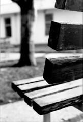 A place to be (Maryam.z) Tags: park blackandwhite tree composition bench nikon focus university iran persia tehran