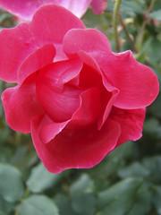 DSC03555 (mark5032001) Tags: flowers colors flowercolors flowerpicturesnolimits