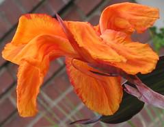 Phipps Orange
