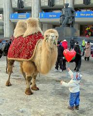 Camel charming, Almaty, Kazakhstan, January 3, 2008 (Ivan S. Abrams) Tags: arizona ivan camel getty abrams kazakhstan almaty gettyimages canong6 smrgsbord tucsonarizona 12608 onlythebestare ivansabrams trainplanepro terryabrams pimacountyarizona safyan arizonabar arizonaphotographers ivanabrams cochisecountyarizona winterinkazakhstan tucson3985 gettyimagesandtheflickrcollection copyrightivansabramsallrightsreservedunauthorizeduseofthisimageisprohibited tucson3985gmailcom ivansafyanabrams arizonalawyers statebarofarizona californialawyers copyrightivansafyanabrams2009allrightsreservedunauthorizeduseprohibitedbylawpropertyofivansafyanabrams unauthorizeduseconstitutestheft thisphotographwasmadebyivansafyanabramswhoretainsallrightstheretoc2009ivansafyanabrams abramsandmcdanielinternationallawandeconomicdiplomacy ivansabramsarizonaattorney ivansabramsbauniversityofpittsburghjduniversityofpittsburghllmuniversityofarizonainternationallawyer