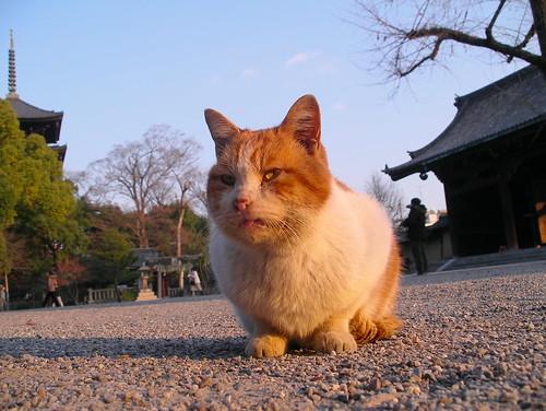 お寺の猫遂に全滅か?