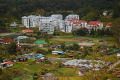 Cameron Highlands (Mitamada) Tags: green nature forest rainforest scenery southeastasia view resort hills highland rainy malaysia cameronhighlands asean muntain