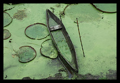victoria regia (Jaydi y...) Tags: peru plantas barca amazonas composicion amazonriver