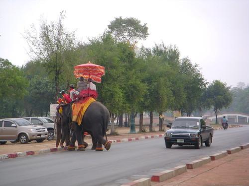 elefante entre el trafico