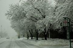 Winter Storm -  February 17, 2008 (5)
