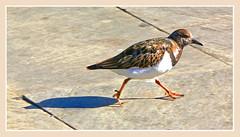 Tengo prisa (Luis M) Tags: portrait bird retrato animales oiseau pjaro