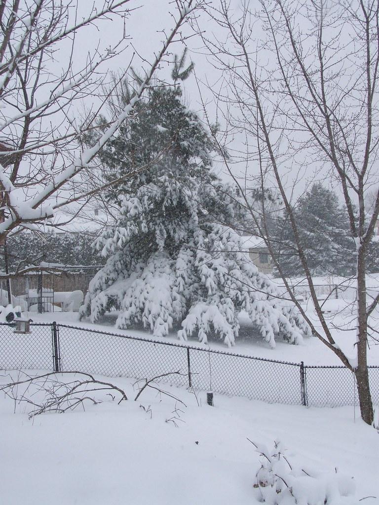 winter08-3