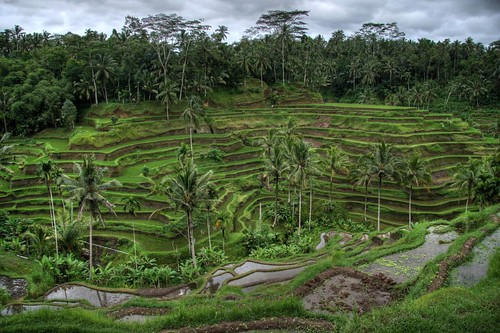 Rice Valley, Near Ubud, Bali