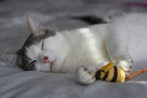 sleeps with bees