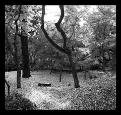 0712EKD_03 (grain of sand) Tags: kyoto autumntrees eikando blackandwhitejapan