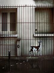 chevreuil5_15 (Le Chevreuil) Tags: urban streetart paris france collage french stencil papier chevreuil pochoir lechevreuil