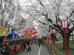 熊谷桜堤_0909