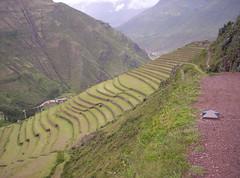 One way to Pisaq Ruins (Grabby Walls) Tags: travel peru inca cuzco america cusco south valle per sacra valley sacred viaggi viaggio sud incas pisaq sagrado viaggiare qosqo absolutelystunningscapes grabbywalls