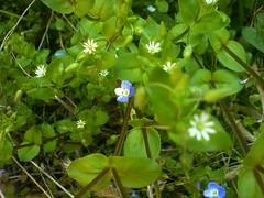 Girovagando tra... (Elanorya) Tags: verde nature foglie erba cellulare fiori terra aria cubism giornata svago