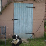dog in front of old door thumbnail