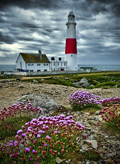 Sea Pink at Portland Bill (petervanallen) Tags: pink flowers lighthouse landscape lumix panasonic hdr portlandbill seapink vosplusbellesphotos