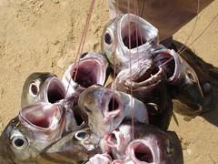 por su boca muere Acapulco