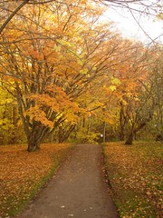 Autumn (kezwan) Tags: autumn slottsskogen welltaken kezwan top20autumn
