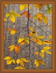 Natural Symmetry (singhsardar) Tags: autumn toronto fall nature leaves yellow branch symmetry simplicity ordinary ontariosciencecentre bestofautumn