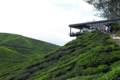 BOH Tea Plantation (irwandy) Tags: cameron malaysia nd cameronhighlands teaplantation boh perak bohtea irwandy sungaipalas sungeipalas sgpalas ladangteh