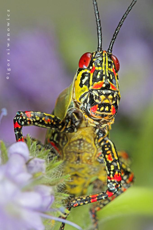 1927002814 2e933a7632 o Amazing Insects!