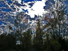 The Shining Sky (CountryDreaming) Tags: autumn trees light shadow ohio sky fall silhouette clouds dark silhouettes mysterious outline outlines shining