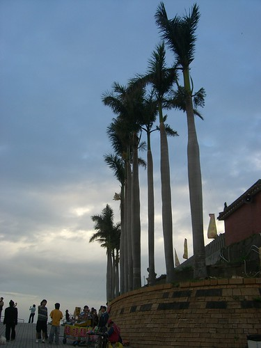 Coconut tree guarding at Great Buddha Temple, Changhua