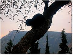 By Victor Blas ;o)*** (.Tatiana.) Tags: nature cat contraluz greek delphi son greece grecia gato filho templo grcia silhueta victorblas delphos fotoclube clicbyvictor templodedelphos siteparavendadefotos httpwwwplanobfotodesigncom fototatianasapateiro