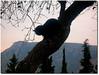 By Victor Blas ;o)*** (.Tatiana.) Tags: nature cat contraluz greek delphi son greece grecia gato filho templo grécia silhueta victorblas delphos fotoclube clicbyvictor templodedelphos siteparavendadefotos httpwwwplanobfotodesigncom fototatianasapateiro