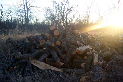 WoodPile