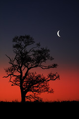 Simplicity (rob mccoll) Tags: moon tree silhouette sunrise landscape dawn warwickshire blueribbonwinner colorphotoaward impressedbeauty superbmasterpiece goldenphotographer treesubject ysplix overtheexcellence betterthangood theperfectphotographer goldstaraward mailciler mortonbaggot captivatingcaptures llovemypic rickspixtop50 multimegashot alemdagqualityonlyclub